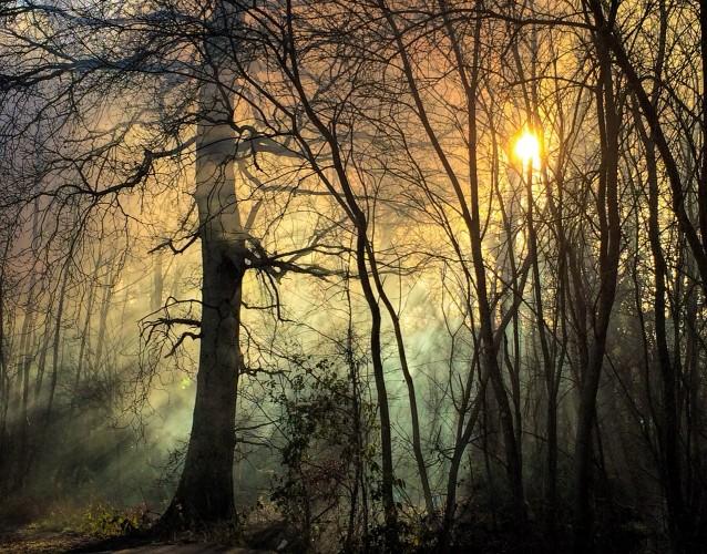 Frosty Dawn - Helena