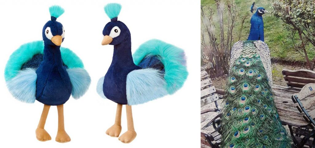 RSPB Peacock Soft Toy Facebook Competition